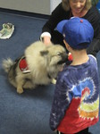 Boy interacting with Fozzie, who is wearing his therapy dog vest.