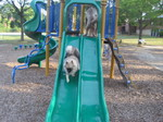 Fozzie walking down playground slide.