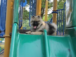 Fozzie smiling at top of playground slide.